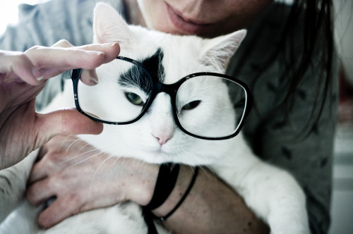 1tself:  slekes:  Intellectual cat… (by ooppssyy)  cat