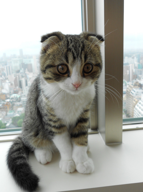photogenicfelines:  (htakahashi13)