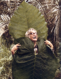 susannacole:  Roberto Burle Marx, a Brazilian landscape architect (as well as a painter, print maker, ecologist, naturalist, artist and musician) whose designs of parks and gardens made him world famous.