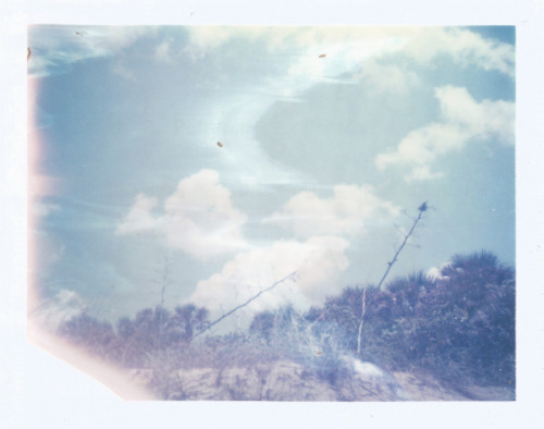 Roid Week - Day Two by dreamscapesxx on Flickr.