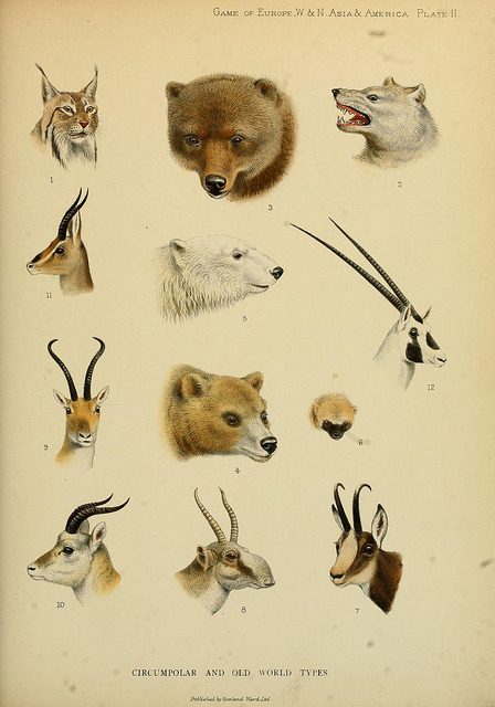 scientificillustration:  Circumpolar and old world types by BioDivLibrary on Flickr.