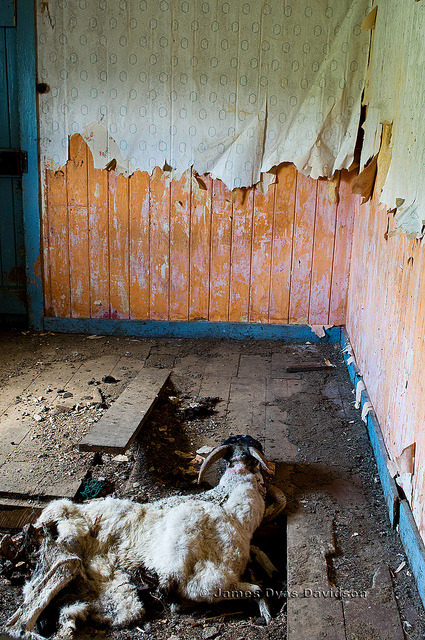 jamesdyasdavidson:  'Evicted to make way for sheep' on Flickr. Perhaps. Oh, the irony of it all. © James Dyas Davidson