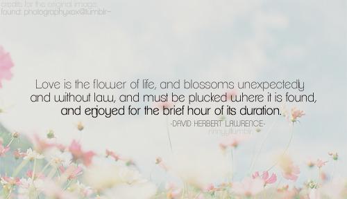 quote-book:  David Herbert Lawrence // via rinnyy.