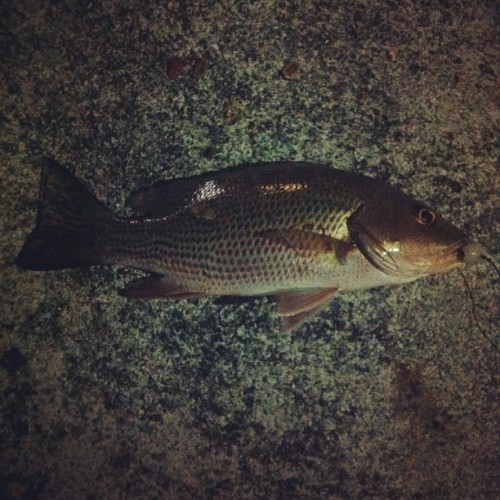 6th one tonight #fish  (Taken with Instagram)