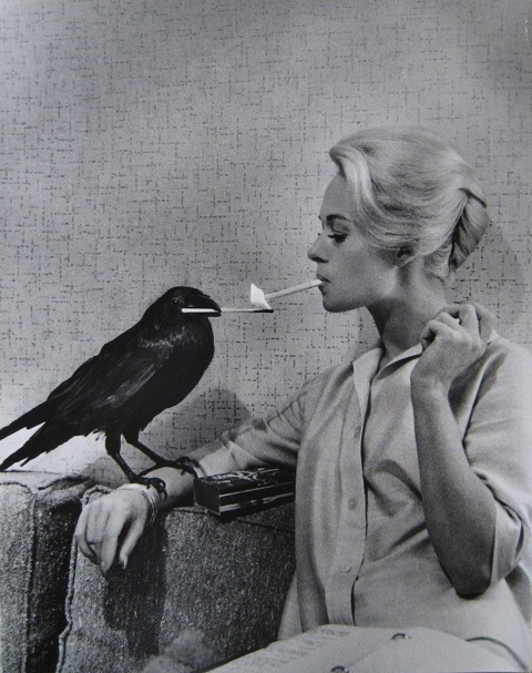 "aconversationonmovies:  The Birds, 1963 "" Why are they doing this? Why are they doing this? They said when you got here the whole thing started. Who are you? What are you? Where did you come from? I think you're the cause of all of this. I think you're evil. EVIL!"""
