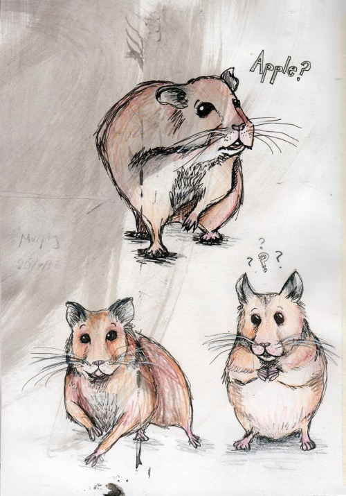 sarahj2810:  Feeling a bit miserable today, so here are some sketches of Murphy the hamster…  One day they will be proud owners of a Kia Soul