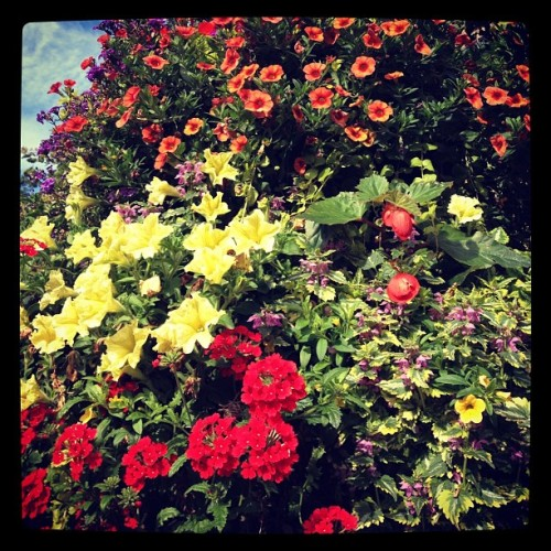 Beautiful flowers outside Glasgow Cathedral (Taken with Instagram)