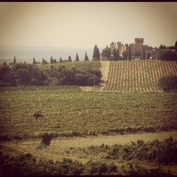 It's harvest time (Taken with Instagram at Chateau Le Nerthe)