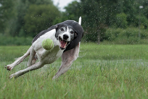 hounddogsrunning:  Success!