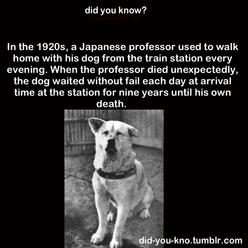 did-you-kno:  Source  Heartwarming story….