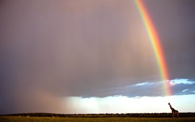 inothernews:  NOT OF GOLD  A giraffe is found at the end of a rainbow in the Maasai Mara, Kenya. (Photo: Paul Goldstein / Exodus via Rex Features / The Telegraph)