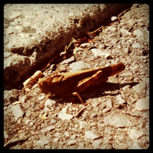 Hopper (Taken with Instagram)