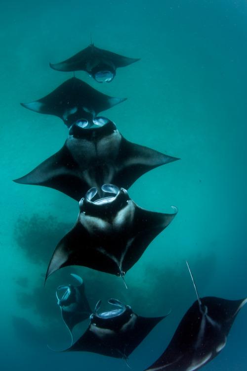 "100leaguesunderthesea:  manta ""train"" by g-na"