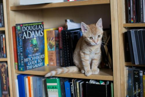 Cat Accepted to Prestigious Iowa Writer's Workshop Natsuki, a kitten from Bend, OR, has been accepted into the prestigious Iowa Writer's Workshop and MFA program at the University of Iowa. The two-year residency program counts among its impressive list of alumni and faculty some 28 Pulitzer Prize winners. Natsuki will become the youngest cat to attend the IWW, beating out 2006 graduate Snowball by 34 days.  She plans to work on an anthology of short stories during her time in Iowa. Via chaosphoenx.