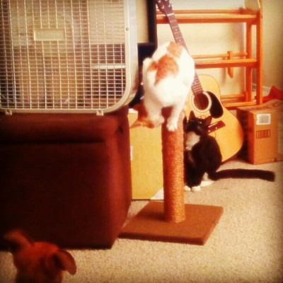 #BruceDog and #SelinaCat watch #IvyCat balance on the mini scratching post. (Taken with Instagram)