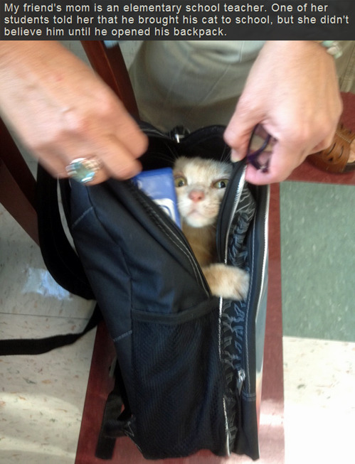 stonedpervert:  Poor kitty, she looks freaked out
