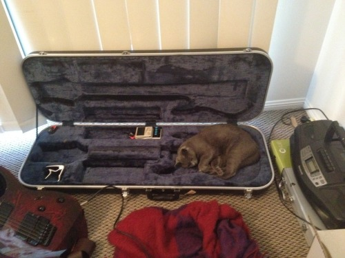 get out of there cat. you are not a guitar. you don't know how to play music.