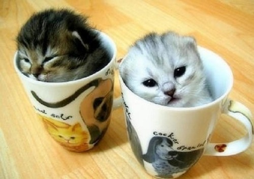 Cutest things ever!
