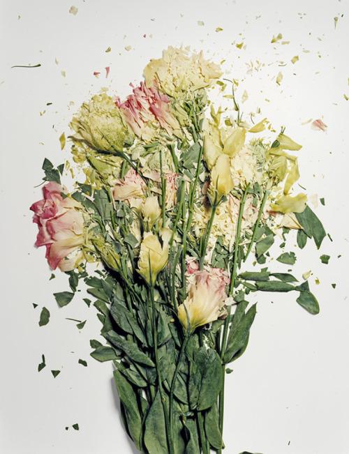 Jon Shireman's Liquid Nitrogen 'Broken Flowers'