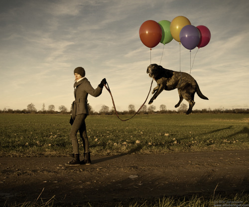"Erik Johansson, ""Lazy Dog"""