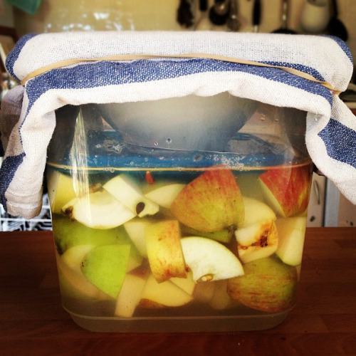 veganfeast:  Apple cider vinegar in progress. by monica.shaw on Flickr. Great idea!