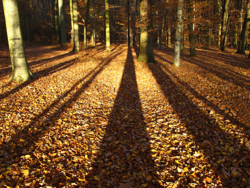Big shadows in the autumn forest (by Habub3)