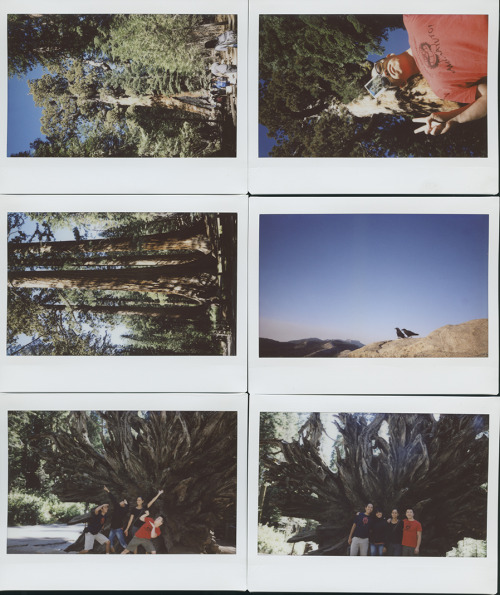 krusen with the chens 7 // yosemite // fuji instax wide we like the big trees so we checked out the sequoias - grizzly giant at top - fallen giant on bottom