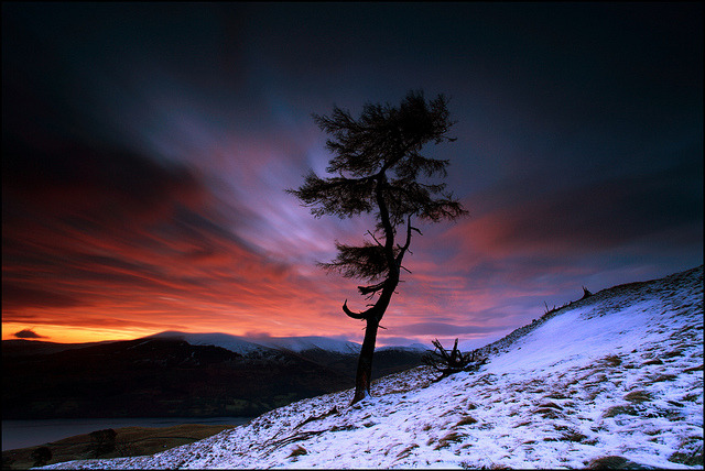 bmrgould:  Larch Tree Dawn Loch Tay by angus clyne on Flickr.