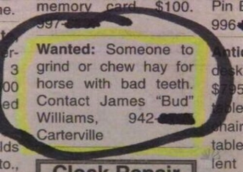 Wanted: Someone to Chew Hay for Horse See, there's plenty of jobs available if you know where to look.