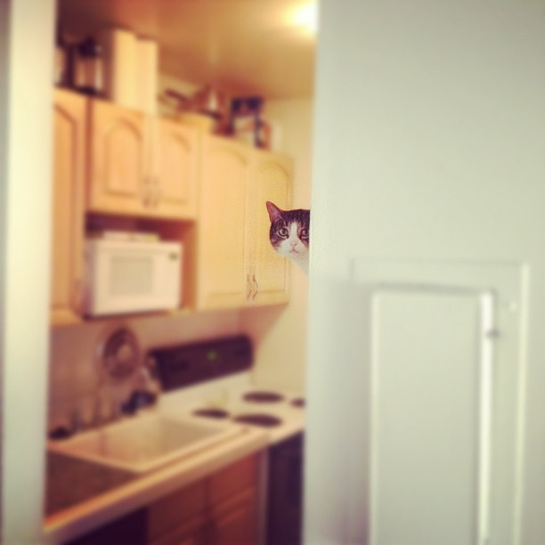 In your kitchen, overseeing your diet. Photo by ©samhunt