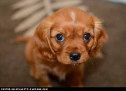 imgur Cute little Butters Stotch doing his cute puppy dog eyes look