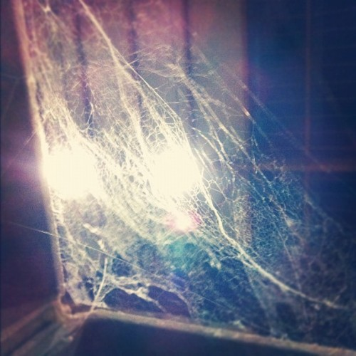 #webs #ragnatele (Taken with Instagram)