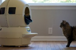 Litter-Robot vs. Cat