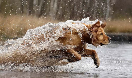 ihavelotsofdogs:  pacodeken1 by rikmaastricht on Flickr.