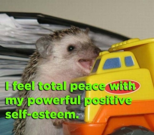 buzzfeed:  Be like this hedgehog today, everyone. Today, we are all this hedgehog.
