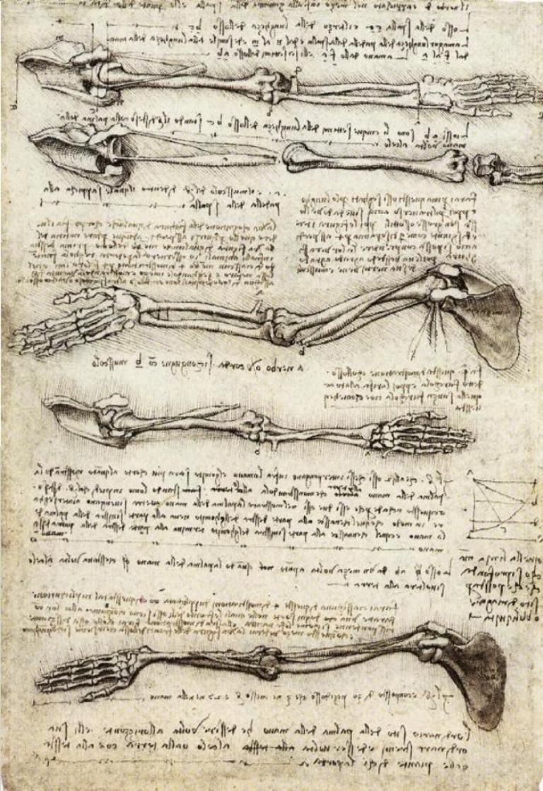 Leonardo Da Vinci - Anatomical study of the Arm (1510)