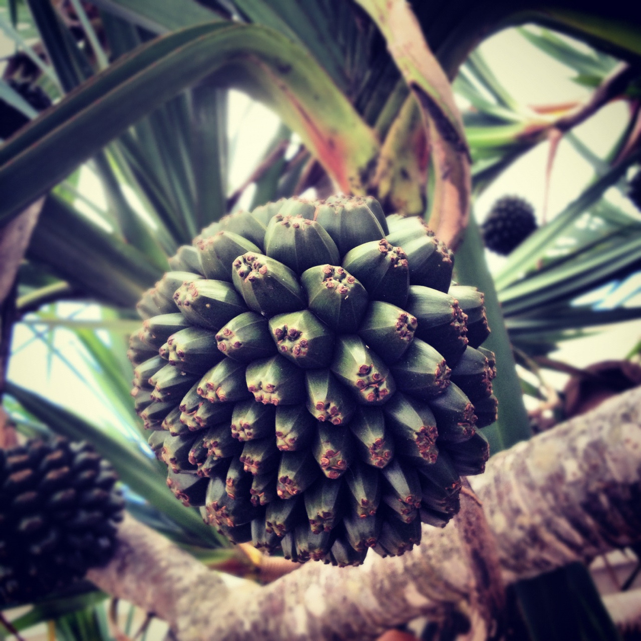 Stumbled upon this great Palm today.