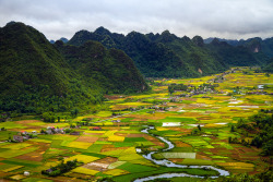 21vines:  Bac Son Rice Field (by V-A-K)