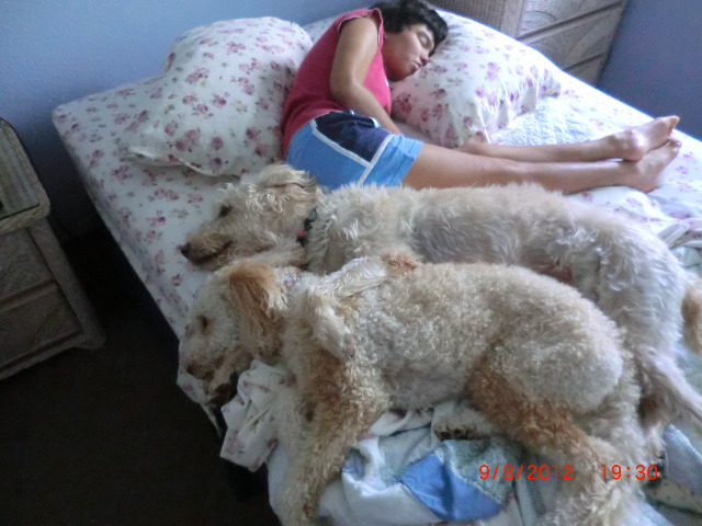 The Power of a Dogs' Love Each morning when I go into Michelle's room to dress her they get to her bed and snuggle before I even cross the room myself.  So there is something that attracts them to Michelle.  I've experimented with covering them with the blankets or having her legs on top of them as I move her to dress her and yet they stick to her until she is dressed and in her chair to go to the breakfast table.  Kind of interesting behavior. — Vickie Kirihara