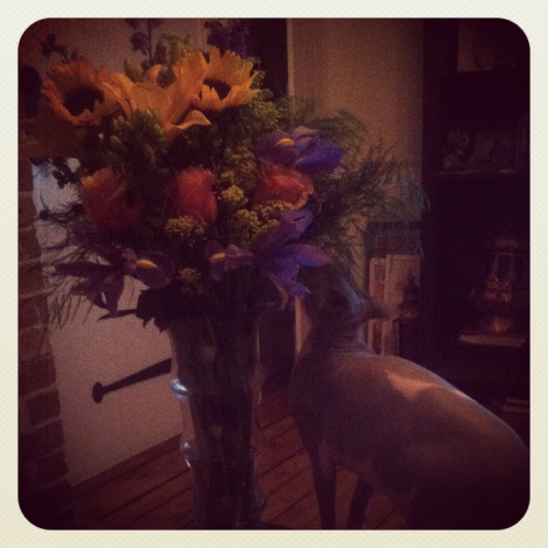 Antigone adores the flowers my most wonderful boyfriend got me. It's a constant battle to stop her from eating them. I don't mind, though. We both love him.
