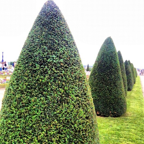 well trimmed.. #versailles #garden #green #paris #france #fr #french #euro #europe #travel #travelingram #tourist #igers #instagram #iphoneography  (Taken with Instagram)