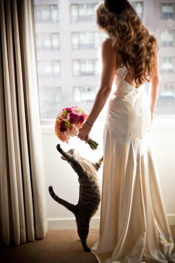 everythingsparklywhite:  The cat wants her bouquet!