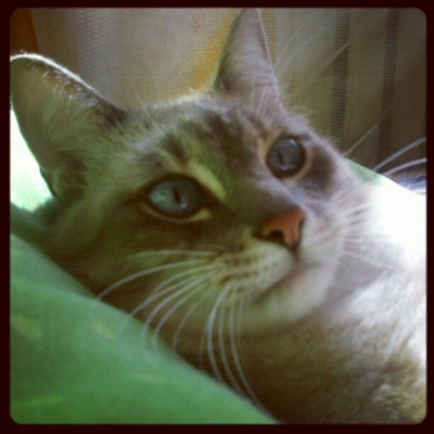 My cute cat! #instagram #photo #cat (Taken with Instagram)