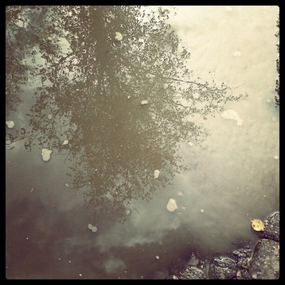 Puddle and the tree! #instagram #photo #live #tumblr (Taken with Instagram)