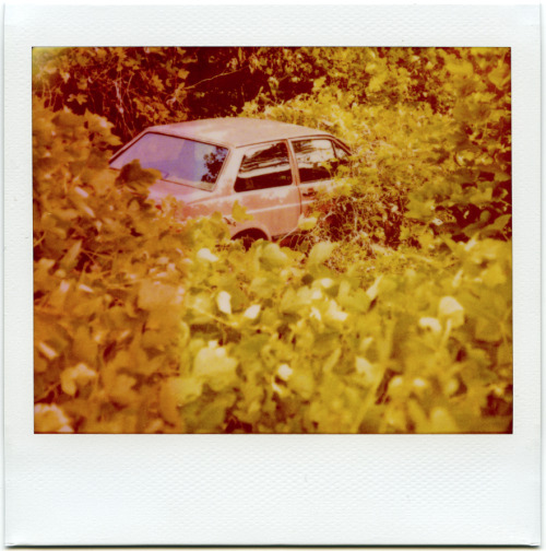Hungry Kudzu | Polaroid Spectra Softone. This image used for some of the new Bad Books II special edition art.