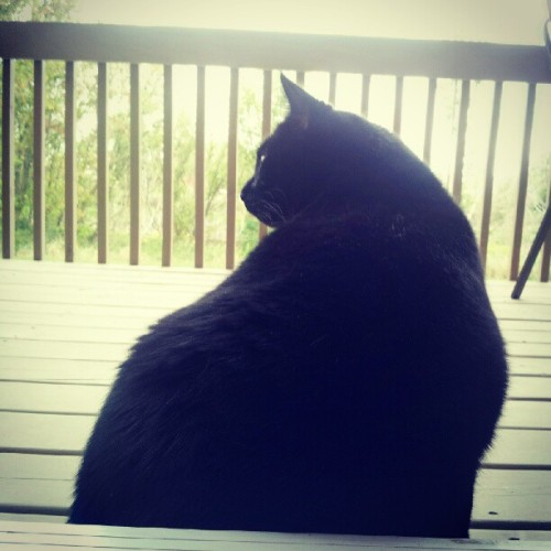 Mr. meekers is a fatty! <3 #cat #pussy  (Taken with Instagram)