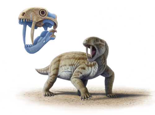 "paleoillustration:  Tiarajudens by Mauricio Antón. ""adult individuals with full-sized tusks could not possibly open their mouths wide enough to bite with them!. So what was the use of their spectacular teeth?"" Find out"