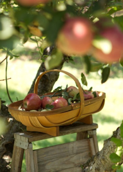 Apple picking time! Source: Terrain
