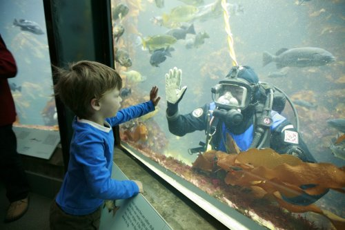 The next James Cameron? You can see our divers feed animals daily. And who knows—you might just get a personal touch! (©Erik Teetzel)  Learn about daily activities.