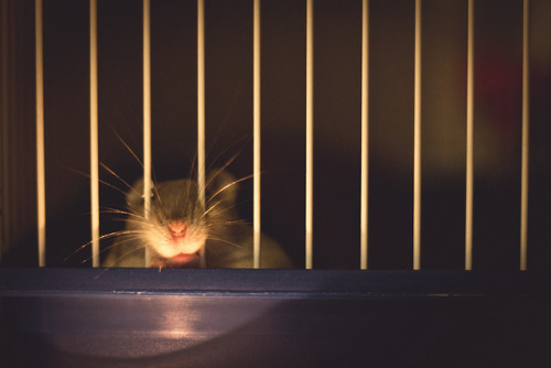 Behind Bars by RhysPDixon on Flickr.